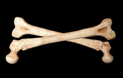 Ossos de esqueleto imagem de stock