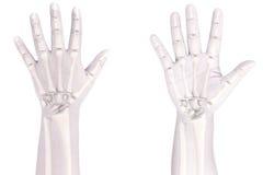 Ossos de mão Imagem de Stock
