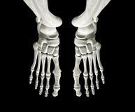 Ossos de pé Imagem de Stock Royalty Free