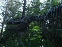 Ossos de T-rex foto de stock