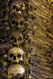 Ossos e crânios Fotos de Stock