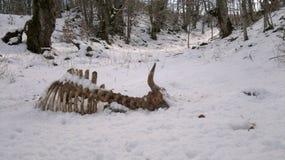 Ossos e neve imagens de stock