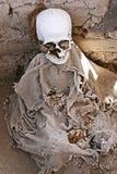 Ossos humanos antigos - fêmur e maxila Fotografia de Stock Royalty Free