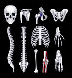 Ossos humanos, no preto Fotografia de Stock Royalty Free