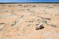 Ossos no deserto Imagens de Stock