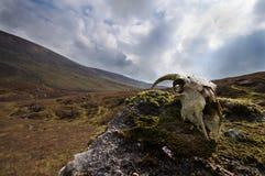 Ossos no vale Imagem de Stock Royalty Free