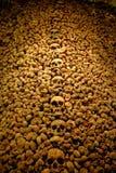 Ossuaire de Brno dans le cachot de St James Chuch Image libre de droits