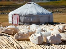 Ost för uttorkning för mongolisk Aaruul eller Gurt sol med ger i backgroun Royaltyfri Foto