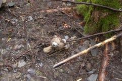Ost våt nallebjörn i strömsäng som överges efter flod Arkivfoton