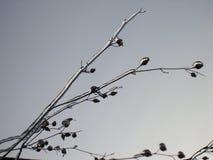 Ostacolato nell'inverno Fotografia Stock Libera da Diritti