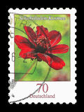 Ostage Stamp : Germany 2015 , Chocolate Cosmos Flower. Postage Stamp : Germany 2015 , Chocolate Cosmos Flower, Schokoladen-Kosmee - Cosmos atrosanguineus Hook Vector Illustration