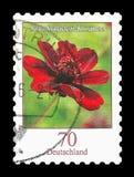 Ostage-Stempel: Deutschland 2015, Schokoladen-Kosmos-Blume Stockbild