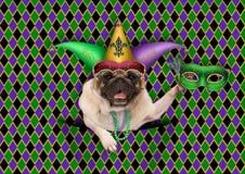 ostatki, gruby Wtorek, tło, z arlekińskim mopsa psem trzyma venetian maskę, jest ubranym arlekińskiego dowcipnisia kapelusz Fotografia Royalty Free