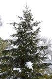 Ostatni śnieg na początku wiosny, ostatni zima dni Obrazy Stock