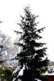 Ostatni śnieg na początku wiosny, ostatni zima dni Obraz Royalty Free