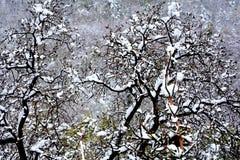 Ostatni śnieg na początku wiosny, ostatni zima dni Zdjęcia Royalty Free