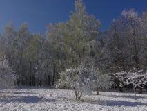 Ostatni śnieg w wiośnie fotografia stock