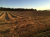 Ostatni światło słoneczne na pszenicznym polu Zdjęcia Royalty Free