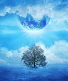ostatni drzewo Fotografia Royalty Free