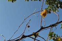 Ostatni jesieni winogrono Zdjęcia Royalty Free