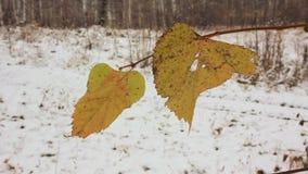 Ostatni kolorów żółtych liście i pierwszy śnieg zdjęcie wideo