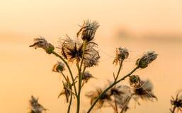 Ostatni kwiaty Zdjęcie Royalty Free