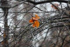 Ostatni liść drzewo Fotografia Royalty Free