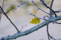 Ostatni liść drzewo na jesieni zdjęcia royalty free