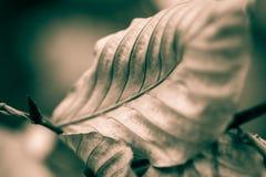 Ostatni liść jesieni Rozszczepiony tonowanie Fotografia Royalty Free