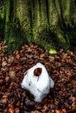 Ostatni liść na śniegu obrazy royalty free