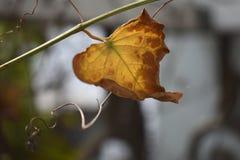 Ostatni liść na gałąź zdjęcia stock