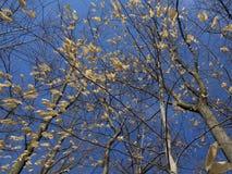 ostatni okres drzewo fotografia royalty free