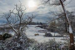 Ostatni opad śniegu zima Sheeps w drzewach i śniegu obraz stock