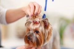 Ostatni szlif załatwiać nowego stylu hairpin zdjęcia royalty free