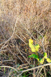 Ostatni zieleni liście Fotografia Royalty Free