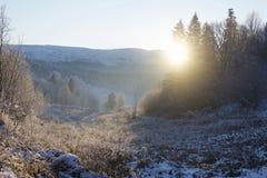 Ostatni zimy słońce Fotografia Stock