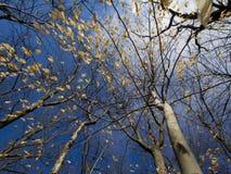 Ostatnia Drzewna pozycja z liśćmi Zdjęcia Royalty Free