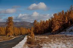 Ostatnia jesień w Altai górach obraz royalty free