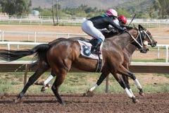 Ostatnie Końskie rasy W Arizona Do spadek Obraz Royalty Free