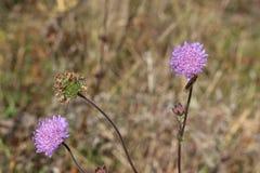 Ostatniej jesieni kwiatu kwiat w ogródzie zdjęcia stock