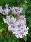 Ostatnio brać ładnego kwiatu Fotografia Stock