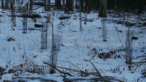 Ostatnio uprawiani mali drzewa w zimie przyprawiają zbiory