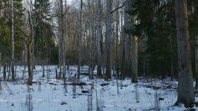 Ostatnio uprawiani mali drzewa w zimie przyprawiają zbiory wideo
