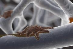 osteoclast vector illustratie