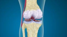 Osteoporose da articulação do joelho ilustração royalty free