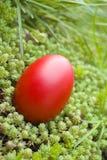 Osterei auf Grünpflanzen Stockfoto