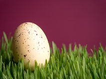 Osterei im Gras Lizenzfreie Stockfotografie
