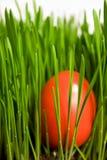 Osterei im Gras stockbilder