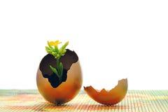 Osterei und gelbe Blume Lizenzfreies Stockfoto