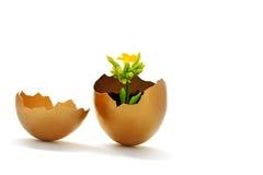 Osterei und gelbe Blume Stockfotografie